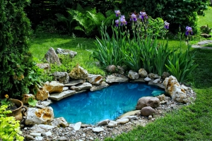 Tips for Adding a Pond to Your Yard