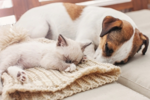 Have Pets? Try this Home Cleaning Routine!
