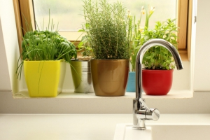 How to Keep Your Plants Watered While You're on Vacation